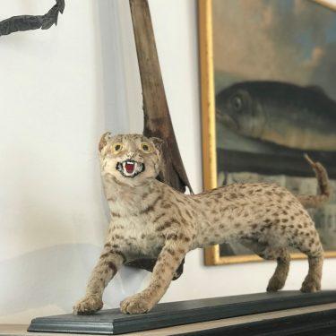 Artikelbild Tierisches aus der Kunst- & Wunderkammer